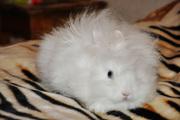 Кролики: миниатюрные,  ангорские