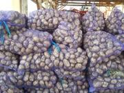 Картофель оптом продажа Украина,  столовый картофель продажа Киев