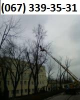 обрезка деревьев весь Киев. 067 339 35 31