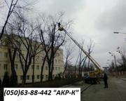 Спилить дерево Киев Удаление деревьев