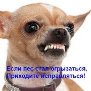 Дрессировка собак с проблемным поведением в Киеве и области