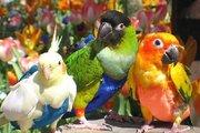 Прогулочный  костюм памперс для выгула попугайчика для дома и улицы