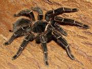 Предлагаем широкий выбор пауков