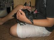 Ворон - мистическая птица у вас дома