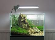 Акция! Первое обслуживание любого аквариума 100грн.