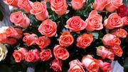 Срезнные цветы,  композиции.Всегда свежие.Лутшие плантации Голландии.До