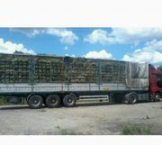Продам луговое сено в тюках,  люцерну. Бесплатная доставка по Украине.
