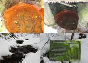 Заричевская минерал 10-14 г/л гидрокарбонат. Кальций. углекислая тип Е