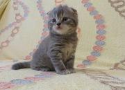 Кошки матрешки