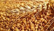 Куплю пшеницю ІІ класу,  Киевская обл.