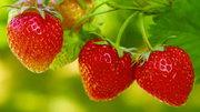 Овощи,  фрукты,  ягоды - сотрудничество/ поставки для заведений HoReCa