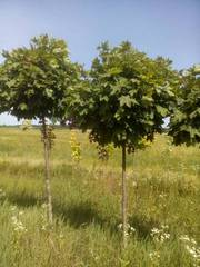Садоводство,  озеленение,  ландшафтный-дизайн.