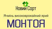 Ячмінь високоврожайний ярий Монтоя (еліта,  Заатен-УніонГмбХ)