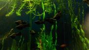 ростение и рыбок аквариумных