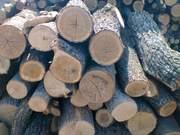 Купить дрова оптом в Киеве и Киевской области.