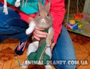 Костюм для выгула кроликов,  прогулочные костюмы для декоративных кроли