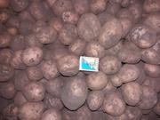 картопля нестандарт