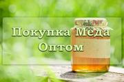 Покупка меда оптом