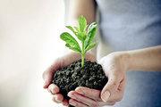 Куплю средства защиты растений,  гербициды,  фунгициды,  инсектициды
