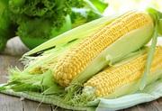 Кукуруза куплю любые объемы