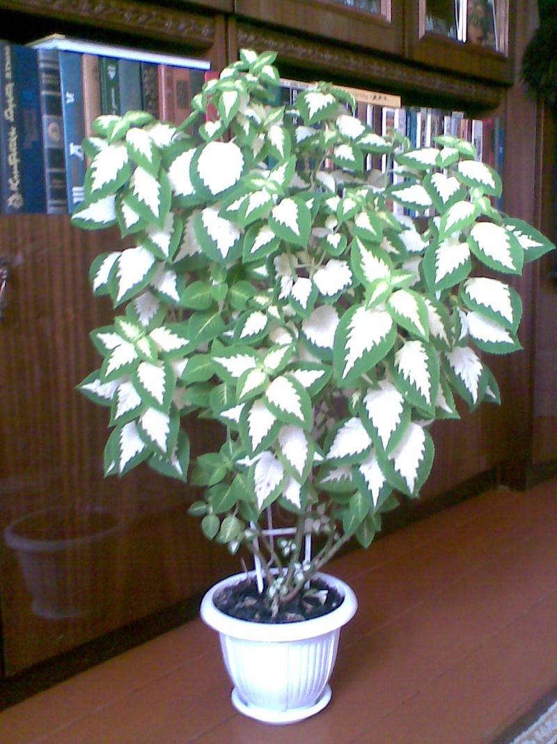 Комнатные растения комнатные